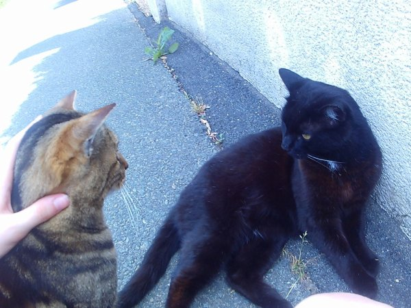 2 chat tres calin ...comme moi !