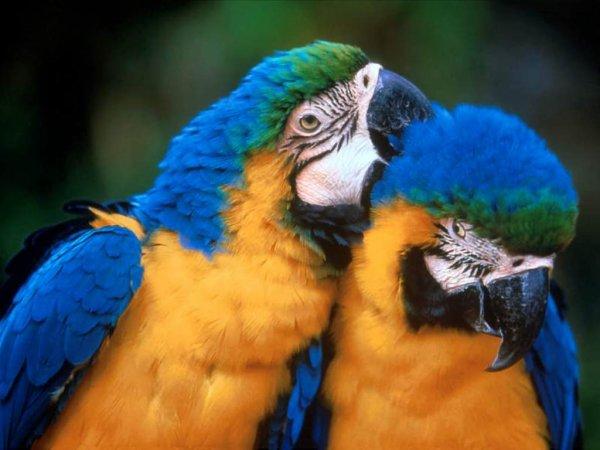 recherche don  perroquet  <3<3<3<3<3<3<3<3<3<3<3<3<3