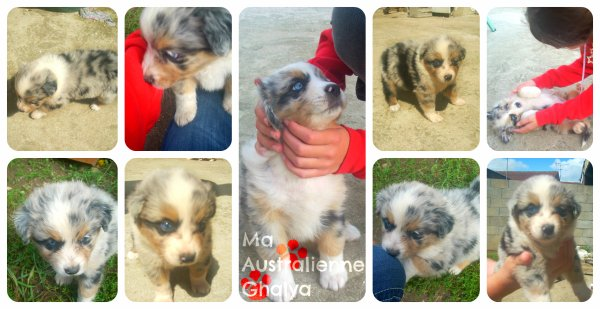 L'histoire de Ghalya
