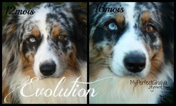 Evolution ♥