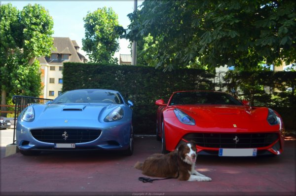Calif dog and F12