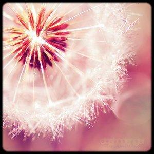 - Parce qu'on ne vivra jamais tous les deux, Parce qu'au fond, ce n'était pas normal, Parce que ma vie se porte mieux depuis que tu t'éloignes. _____________________________________________________________Sheryfa Luna - On ne vivra
