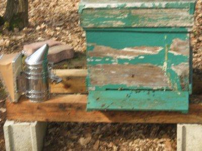 mes premières ruches