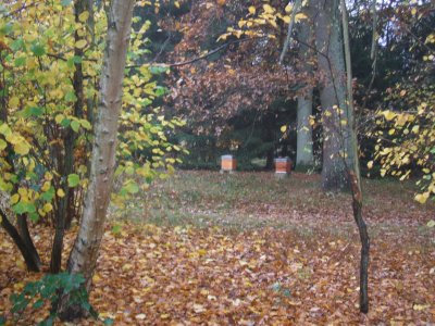 mon rucher en automne