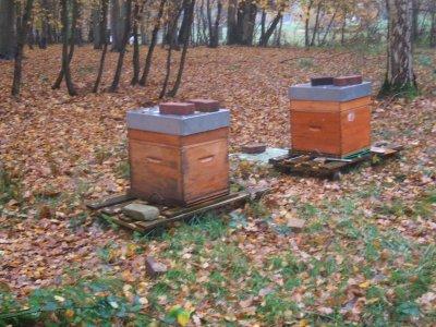 c'est le calme pas d'activité  mes abeilles me manquent déja Merci au 3 propriétaires du bois qui me laissent faire ma passion