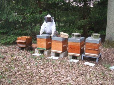 je les aime mes abeilles