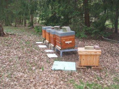 visite du 14 octobre Le pollen rentre sur toutes les ruches Journée ensoleillée Rencontre de gens fort sympathiques Merci pour cet instant magique a refaire le monde