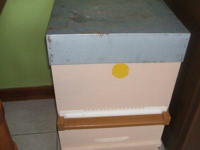 peinture des 4 ruches