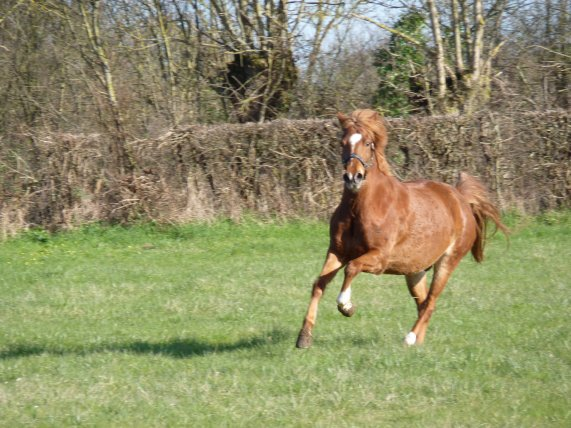Heureux le poney !!