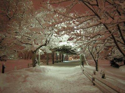 « Il n'est pas d'hiver sans neige, de printemps sans soleil, et de joie sans être partagée. »