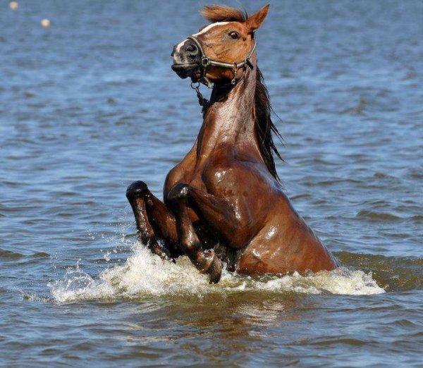 """""""Le cheval, comme chacun sait, est la part la plus importante du chevalier.""""♥"""