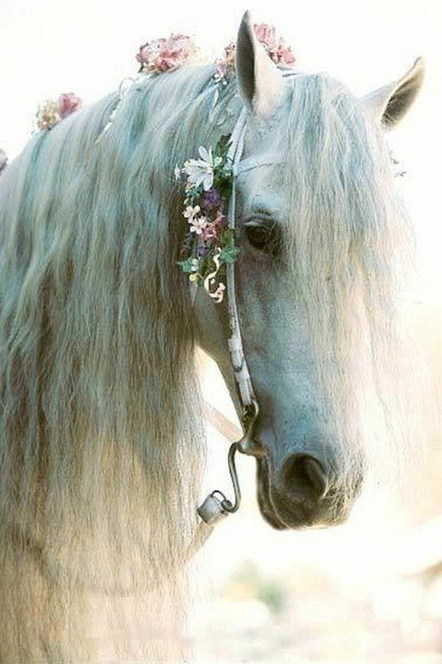 """""""C'est avec une main légère que l'on apprend a un cheval à travailler.""""♥"""
