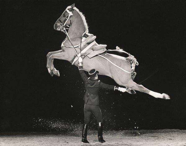 """Le cheval connaita la bride celui qui le mène.""♥"