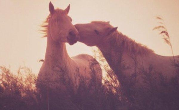 """""""Le cheval est la plus noble conquête que l'homme ait jamais faite.""""♥"""