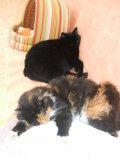Photo de une-vie-deux-chats