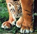 Photo de Tigersdel