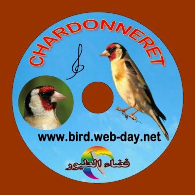 chant chardonneret mp3 gratuit