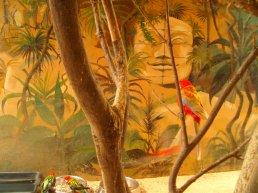 Photographies originales du zoo de la Palmyre (17), puis retouchées par HaappyCréations.