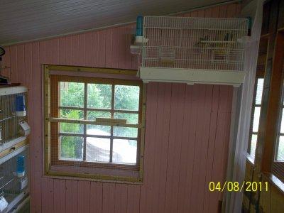 Aujourdhui agé de 16 ans jai debuter mon elevage d'oiseau , voici quelque photo de ma piece d'elevage :) :