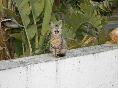 Les chats en Espagne