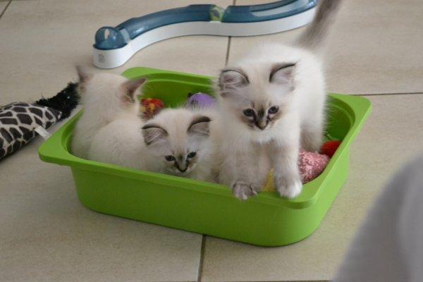 Les bébés de Sweet