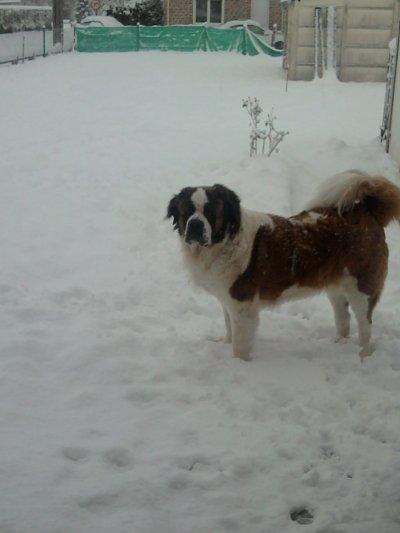 Douchka a la neige