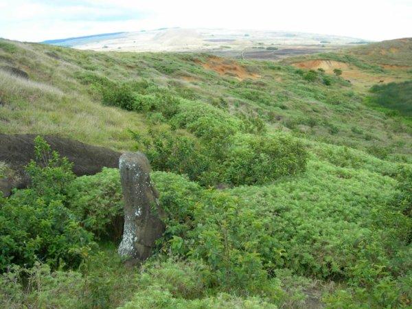 Rano Raraku intérieur - moai n° 108 (numérotation de Routledge) - 14/11/2005