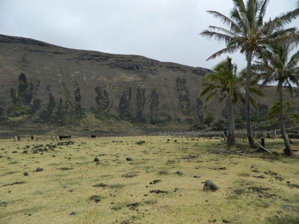 Randonnée de la côte Nord entre l'ahu Te Peu & Anakena - Hanga Oteo - (08/12/2013) - 16