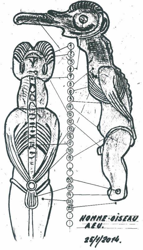 """215e article de FD: """"Expertise d'un homme oiseau """"type AEU"""""""