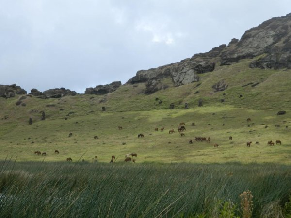 Les chevaux de Rapa Nui (2/3) - 12/2013