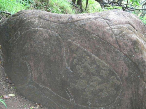 Pierre à pétroglyphes au fond du Rano Kau (20/11/2005) - 3