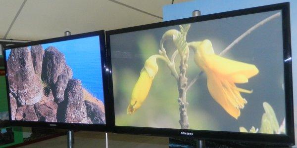 "Visite de l'exposition permanente ""Rapa Nui"" à Güimar - Tenerife (18/10/2014) - 18"