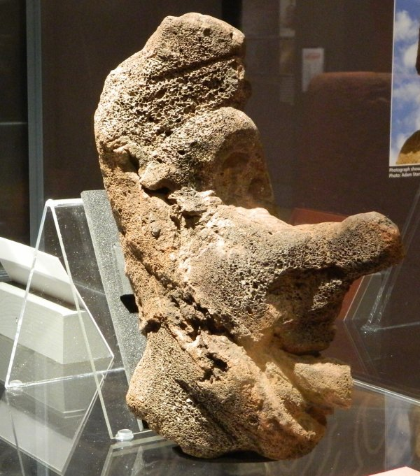 """Visites de l'exposition """"Making Monuments on Rapa Nui"""" à Manchester (13 & 14/05/2015) - 17"""