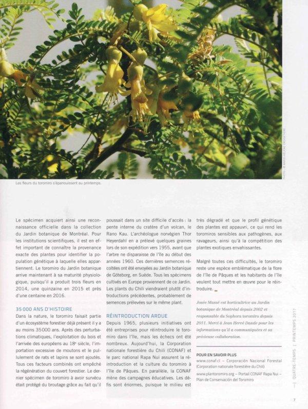 """Revue """"Quatre-temps"""" (Montréal) - Un arbre sacré au jardin - le toromiro"""