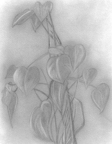 Une belle plante . . .