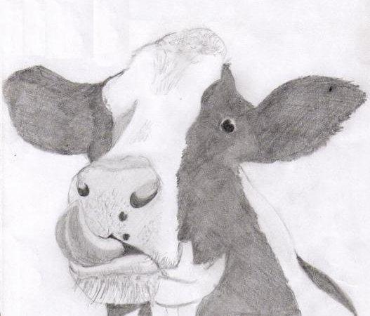 Ca c' est vache . . .