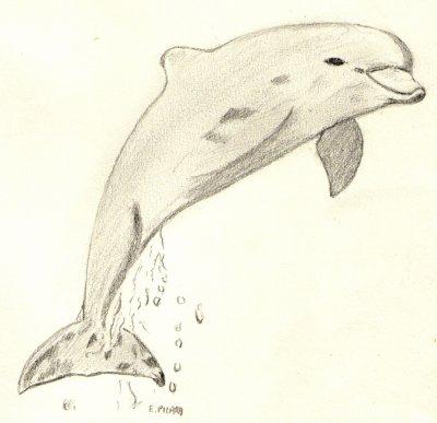 Le gentil dauphin . . .