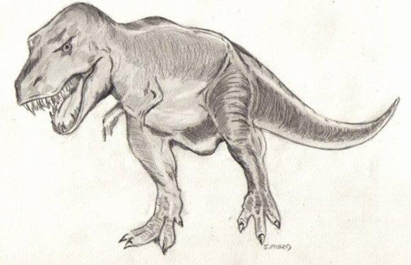 T- Rex ou tyrannosaurus Rex