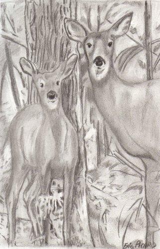 Les animaux : Les biches