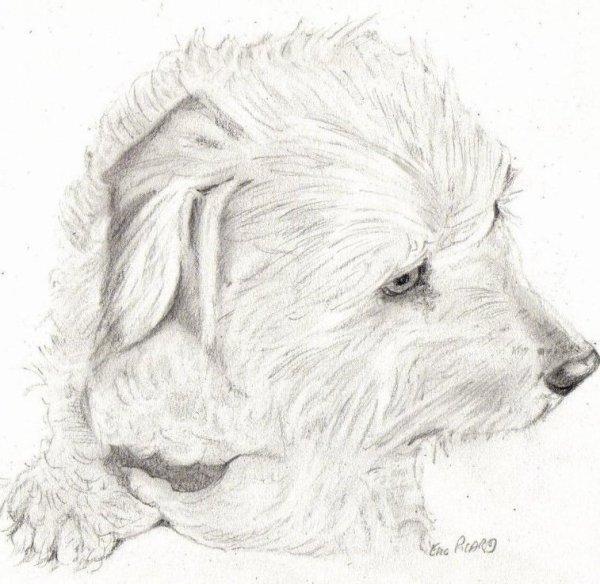 Les Animaux : Babou le chien