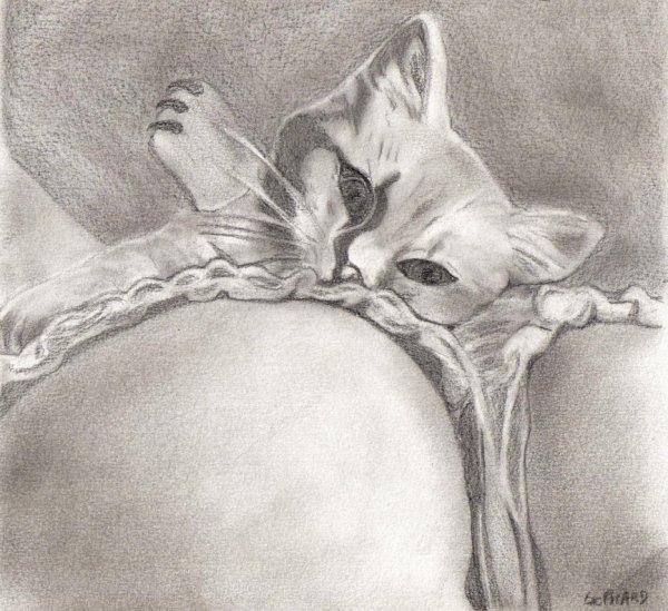 Les animaux : Le chat
