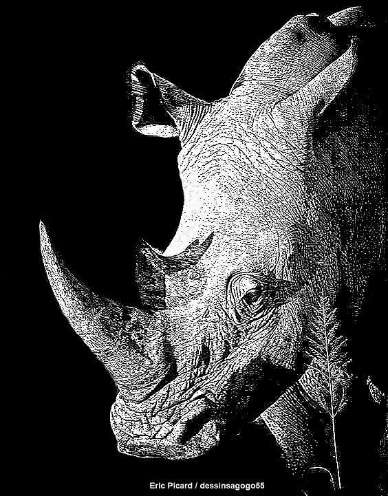 Rhinocéros : dessinsagogo55