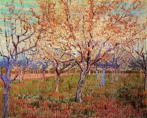 Vincent Van Gogh : Abricotiers en fleurs