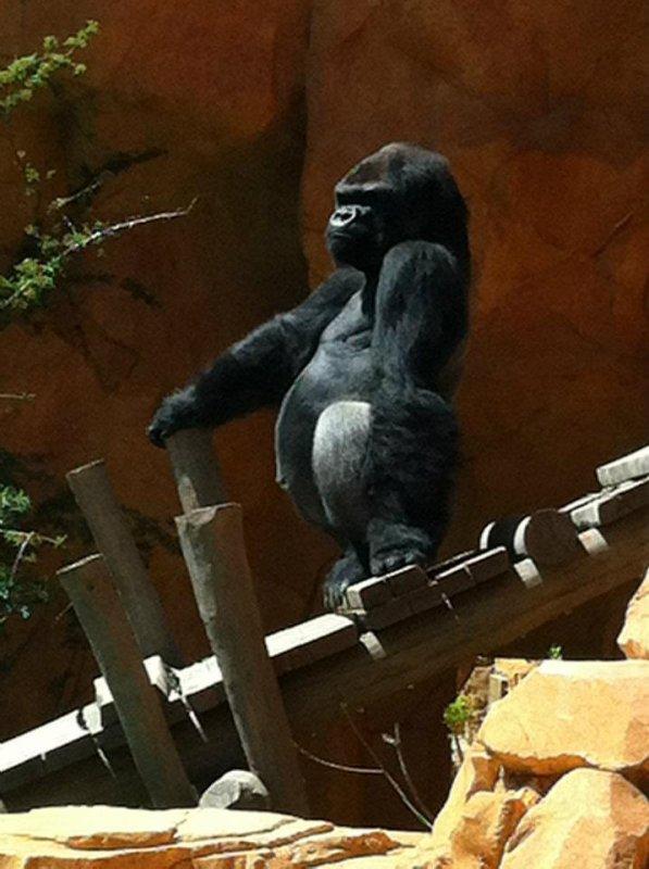 Le Zoo d'Amnéville : La nouveauté