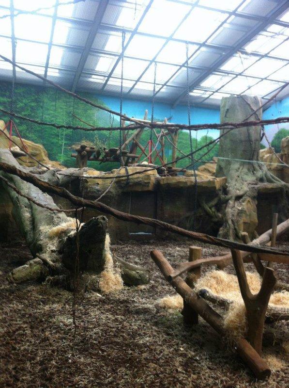 Le Zoo d'Amnéville : La demeure des gorilles
