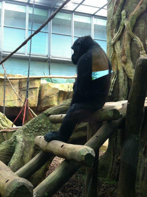 Le Zoo d'Amnéville :