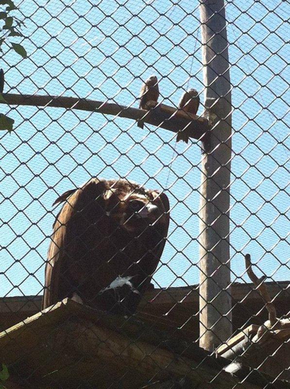 Le Zoo d'Amnéville : Les rapaces