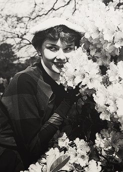 Audrey Hepburn : Galerie de photos