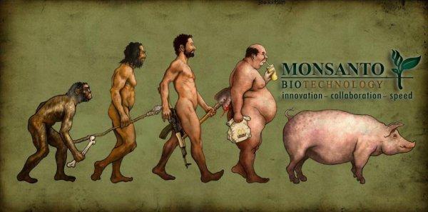 Evolution avec Monsanto