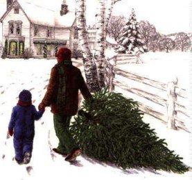 Sapin de Noël : L'arbre de Noël